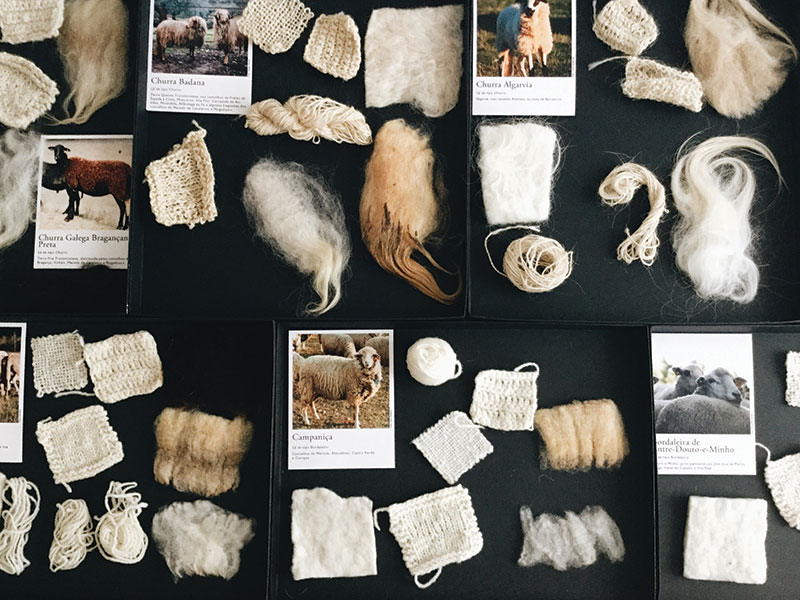 Rare Sheep Breeds