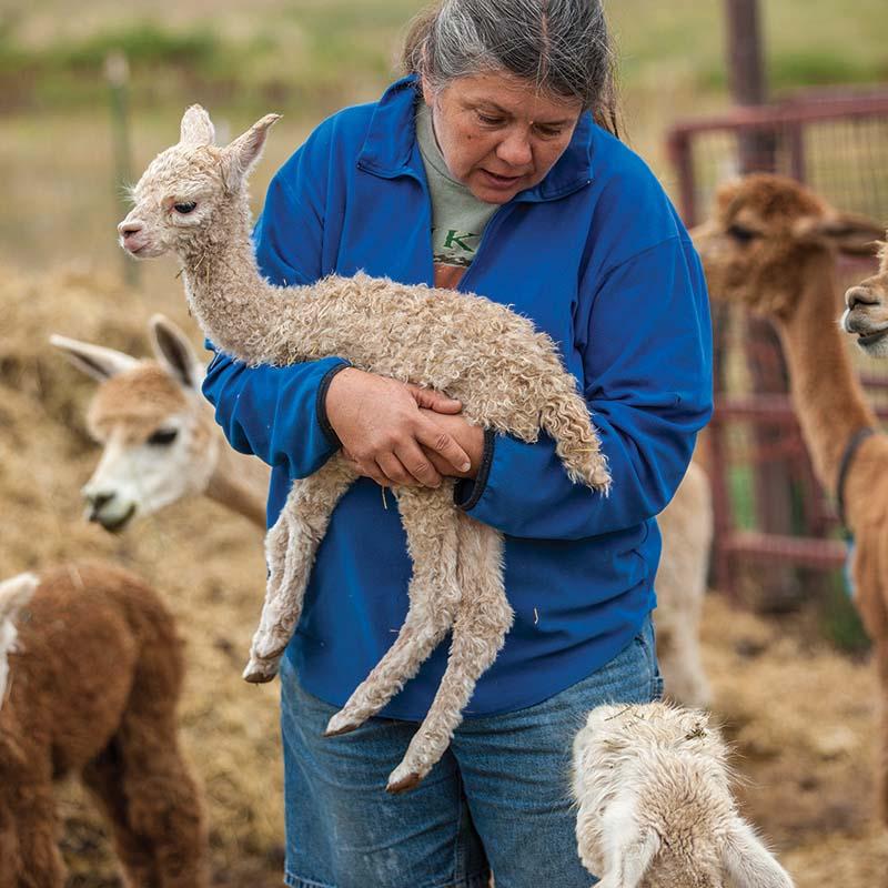 Deb Dorband holds a baby alpaca. Photos by Joe Coca.