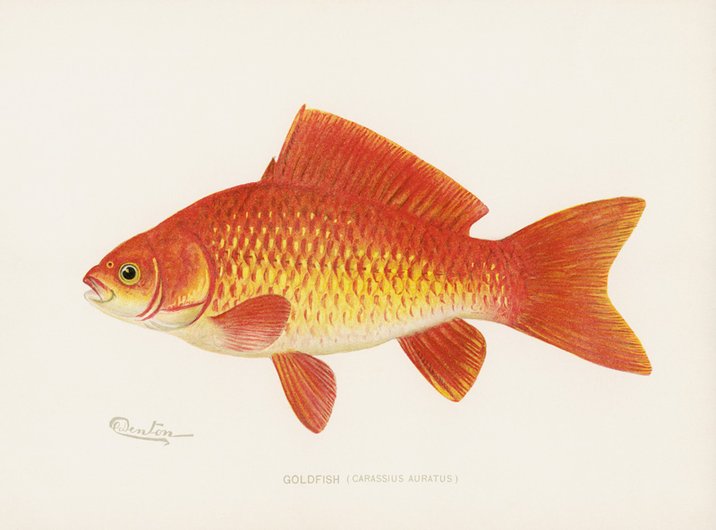 victorian-fish-scale-embroidery: goldfish