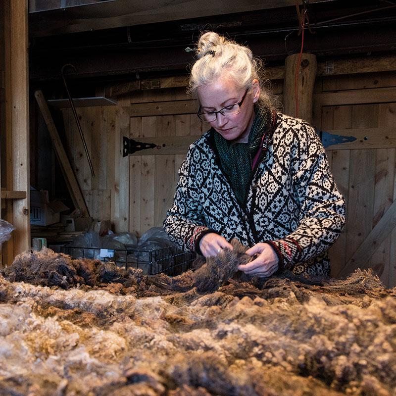 sheep's fleece