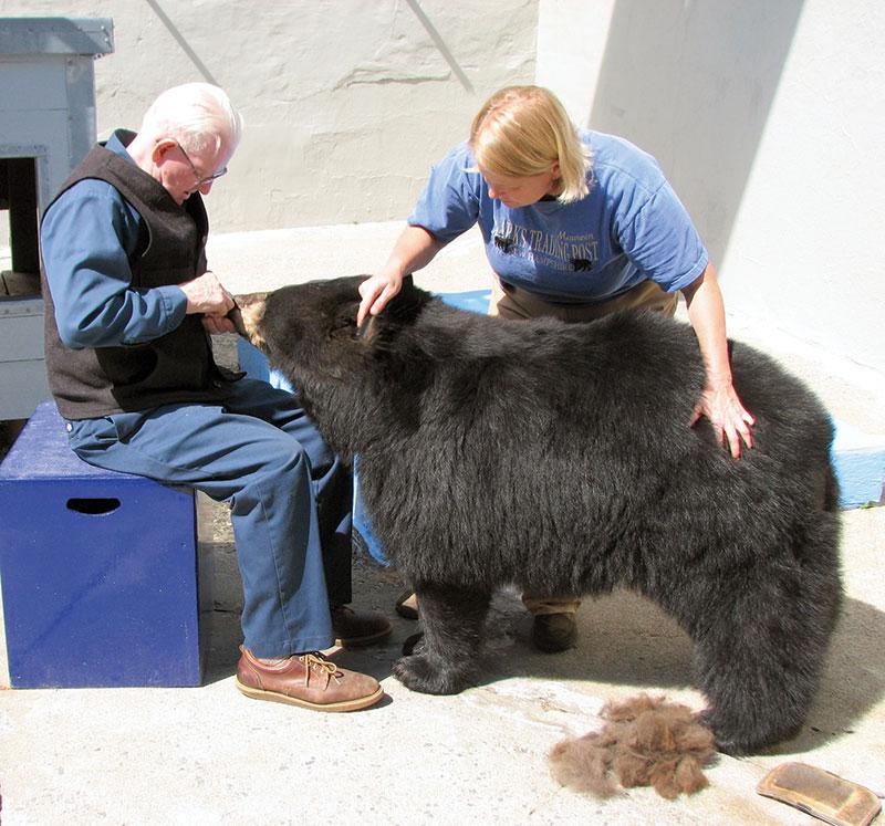 bear knitter