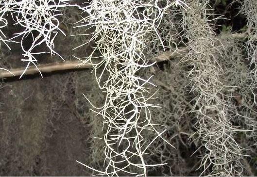 Spanish moss chain making inspiration ideas