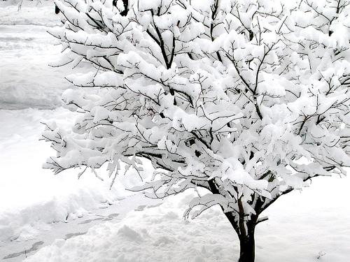 Snow, Day 2