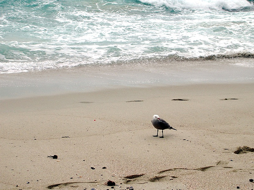 Bird in La Jolla