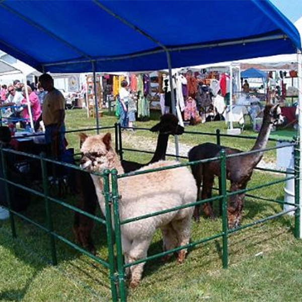 Great Lakes Fiber Show: Alpacas_GLFF.jpg; caption: Alpacas at the show. Photo by Linda Reichert.