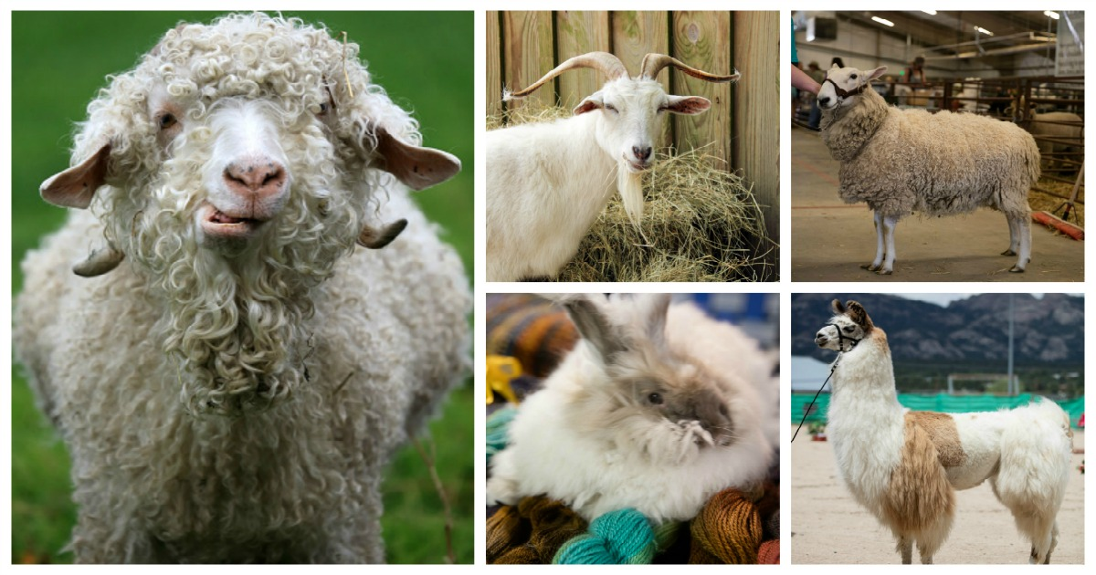 Some of the many faces of yarn