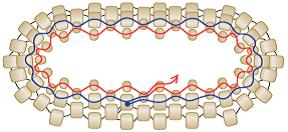 How to Stitch Variations of Peyote Stitch: What You Need to Know. Peyote stitch bezel illustration