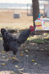 Birthday Cake and Chicken
