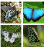 How Well Do You Know Your Butterflies?