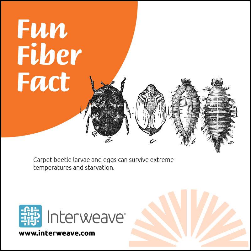 Fiber Fact