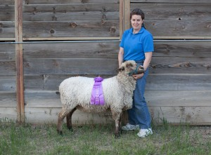 Dana Ruehlman and one of her champion natural-colored ewes