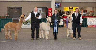 Alpaca Expo