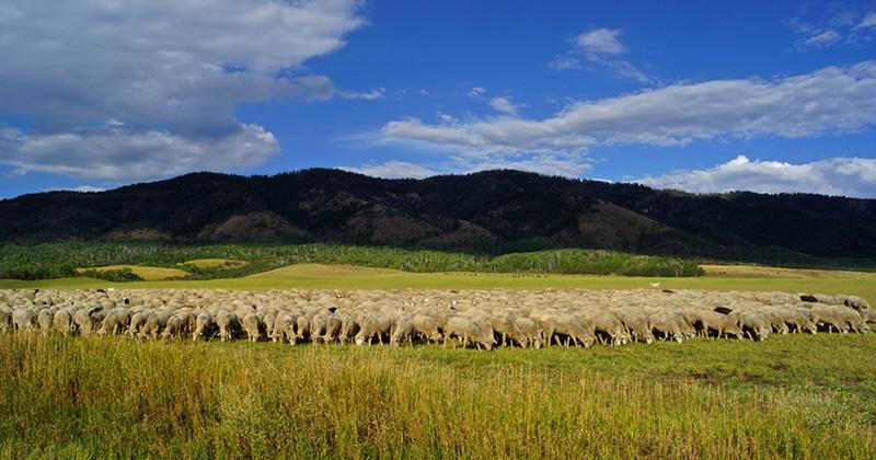 Yarn Spotlight: Field of Breeds