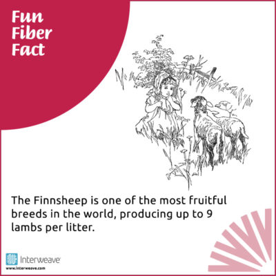 The Finnsheep is one of the most fruitful breeds in the world, producing up to 9 lambs per litter. Source: The Field Guide to Fleece by Deborah Robson and Carol Ekarius