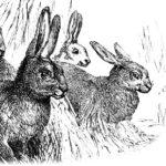 Fun Fiber Fact: Land of Rabbits