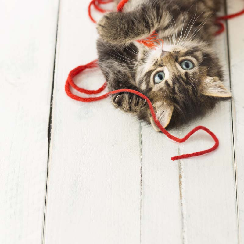 Spin Cat Hair: Kitten playing with wool yarn. Getty Images.