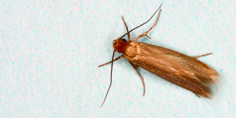 Monster Battle: 4 Ways to Combat A Wool Moth Invasion