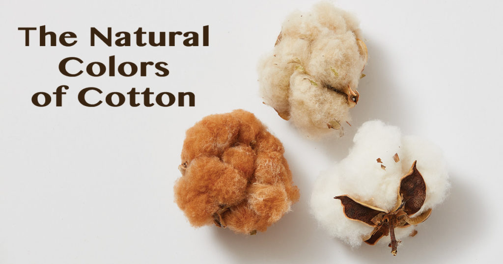 Color Transformation in Naturally Colored Cotton