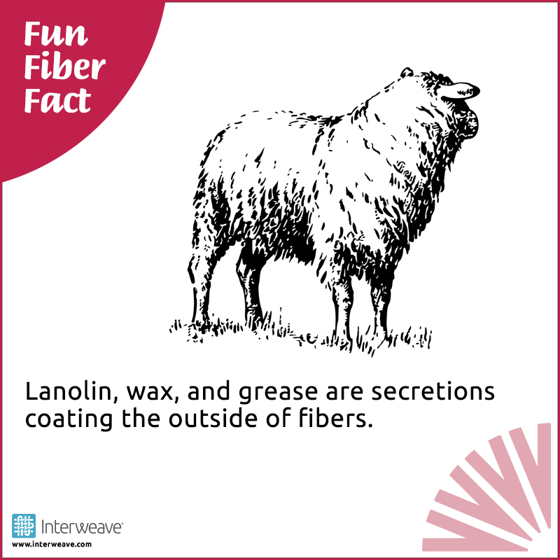 Fun Fiber Facts for Everyone