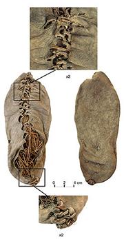 World's Oldest Shoe