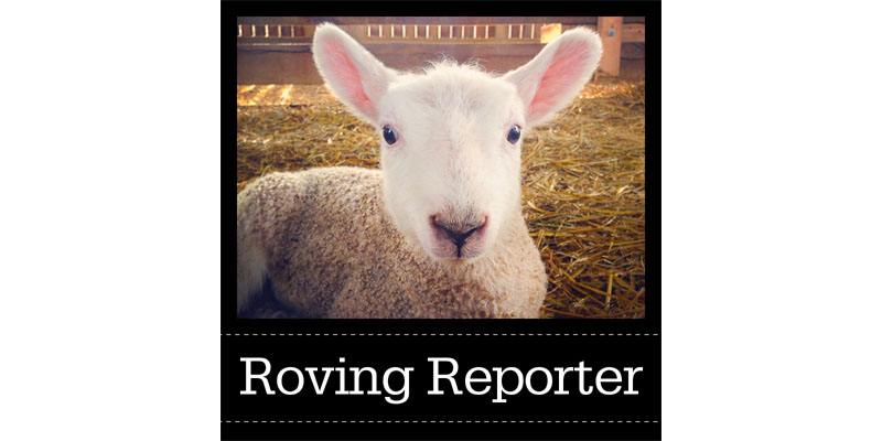 Roving Reporter: A Spinner's Technical Challenge