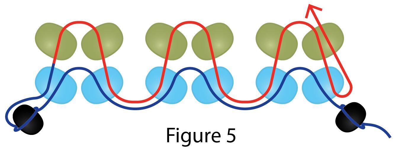 Shaw Method Fig 5