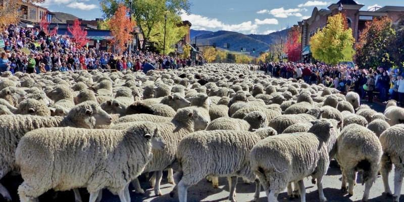 Vista Fiber Arts Fiesta and Idaho Trailing of the Sheep Festival