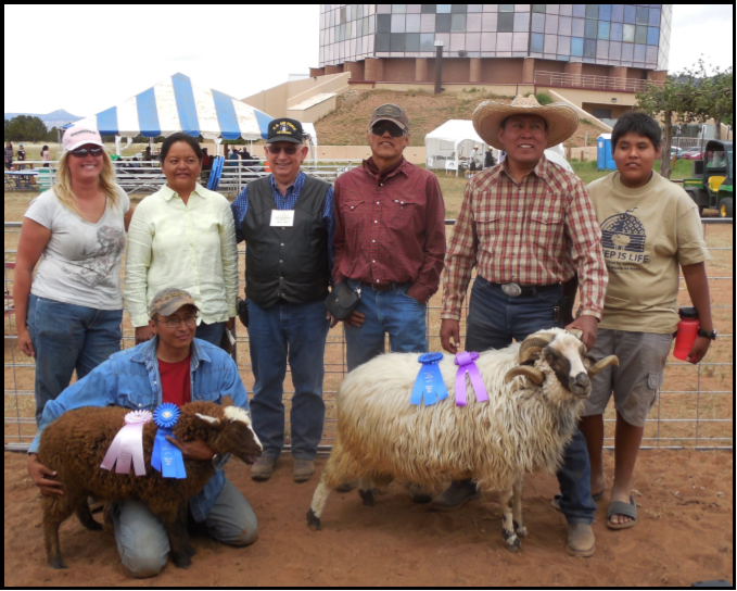 The 2014 Sheep is Life Navajo Churro Sheep and Wool Show. Photo: Cindy Dvergsten.