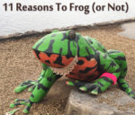 11 Reasons to Frog (or Not)