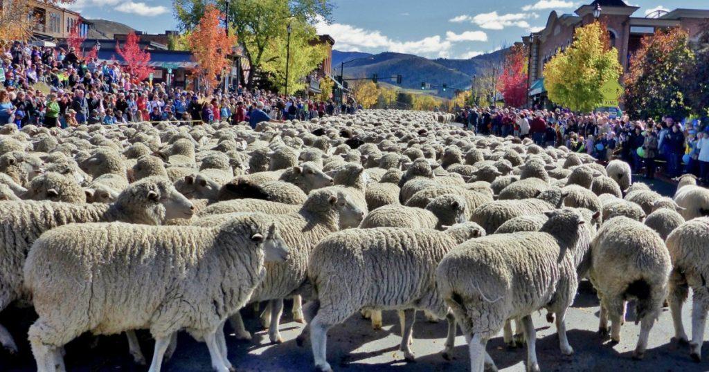 Sheep Festival