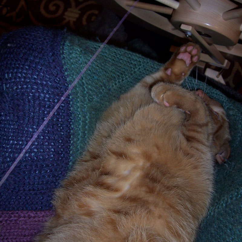 Spin Cat Hair: Wilbur kept his paws out of the spokes of the moving wheel, but the singles fascinated him! Photo by Anne Merrow