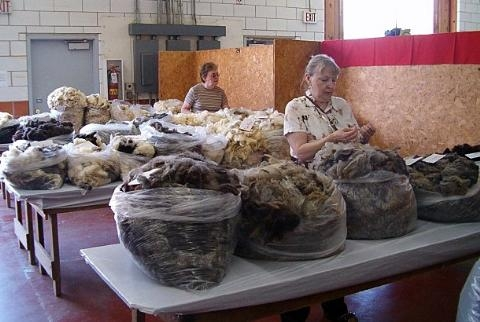 Wool Show fleece