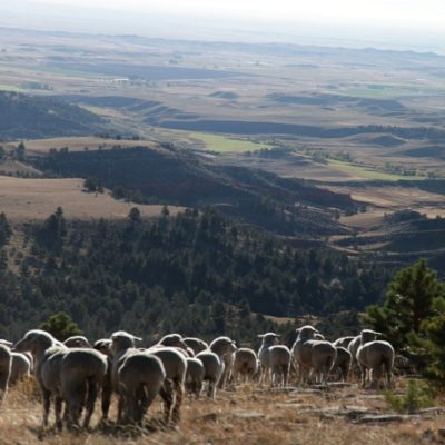 Looking down from the mountains onto the Wyoming plains; Mountain Meadow Wool Mill sits at the base of these mountains. Photo courtesy of Karen Hostetler.