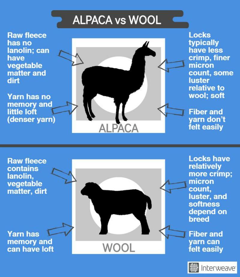 alpaca vs wool