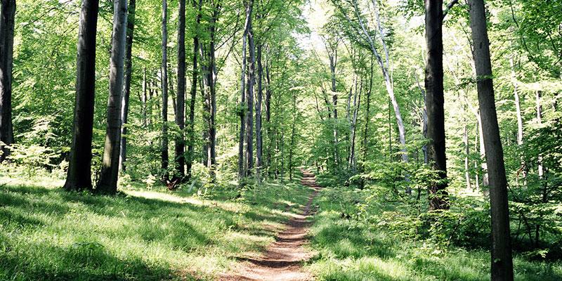 POW: Hiking Henley