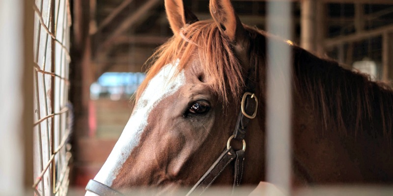 What My Horse Taught Me About Weaving