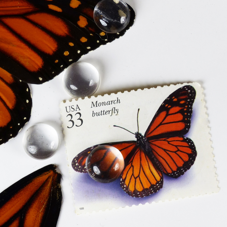 creativity: monarch butterflies
