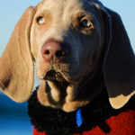 National Dog Day: Does Your Dog Wear Sweaters?