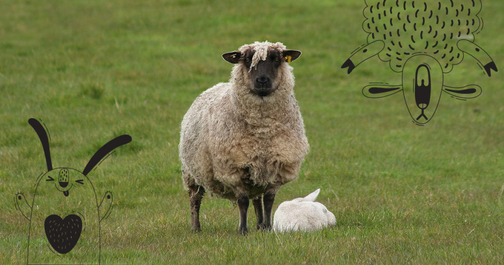 Is it Sheep Bunny Season, or Is it Just Us?