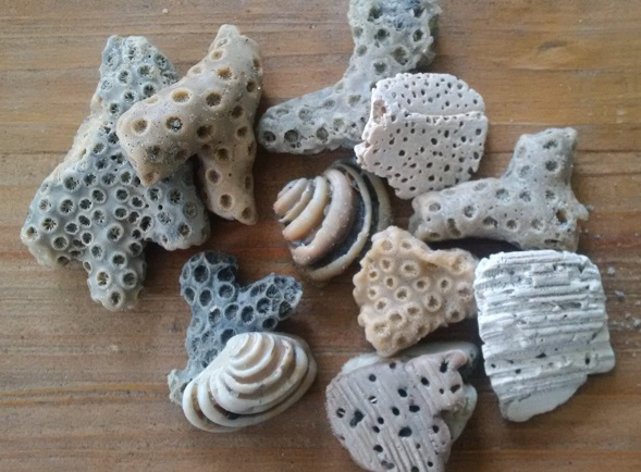 shells, coral, and other found objects perfect for jewelry mold making