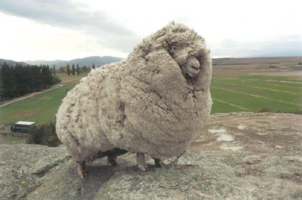shrek-the-sheep