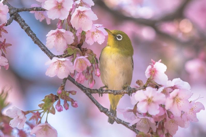 spring jewelry inspiration: spring bird on flowering branch